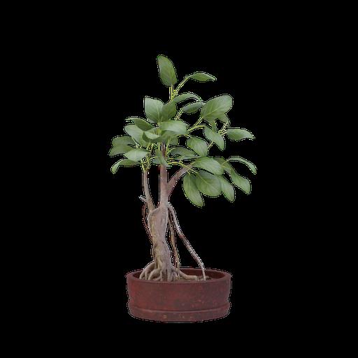 Thumbnail: Plant 32