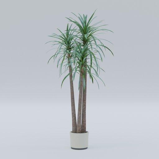 Thumbnail: Small palm