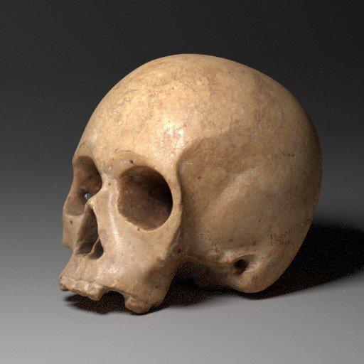 Old human skull modell