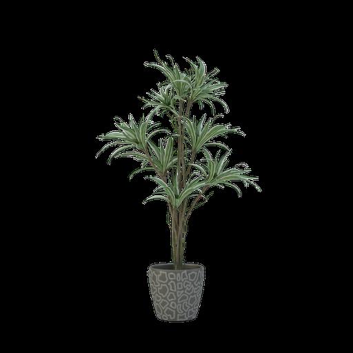 Thumbnail: Plant 59