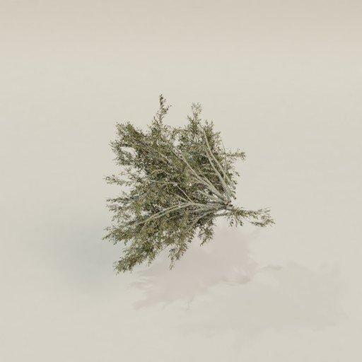 Thumbnail: Creosot bush
