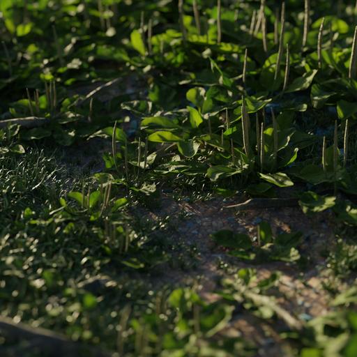 Thumbnail: Broadleaf Plantain