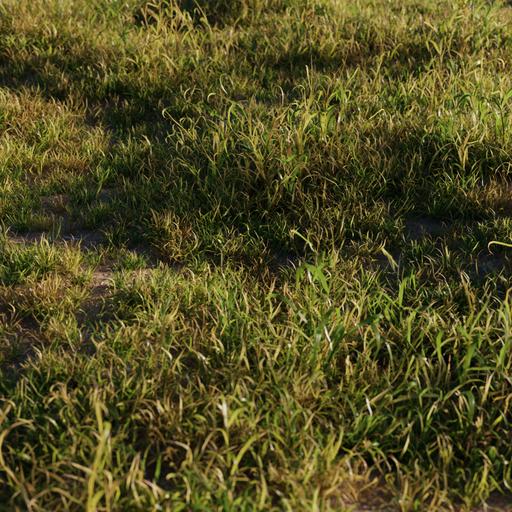 Thumbnail: Wild Grass