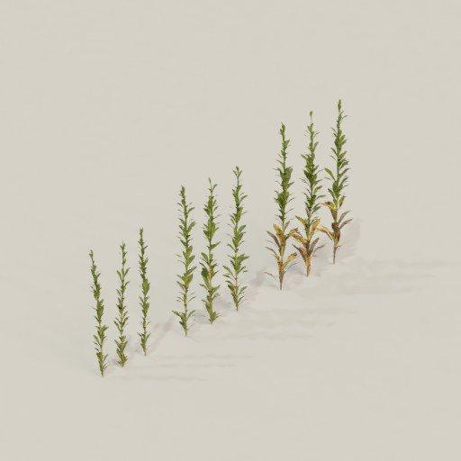 Thumbnail: Small weeds