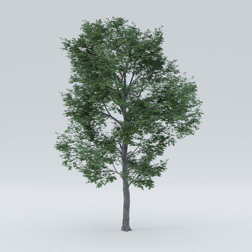 Thumbnail: Ulmus tree