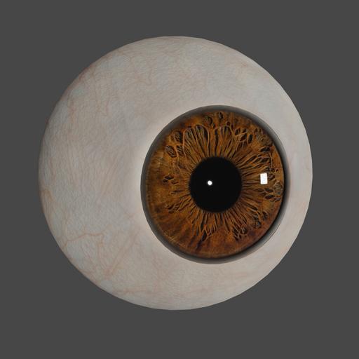 Eye - brown