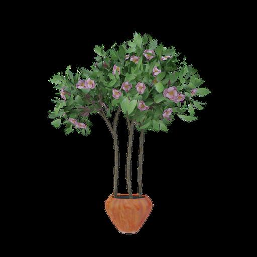 Thumbnail: Plant 57