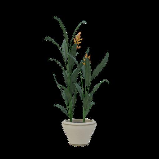 Thumbnail: Plant 56