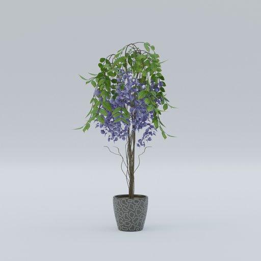 Thumbnail: Plant 65